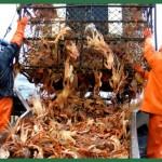 Pesca de cangrejos