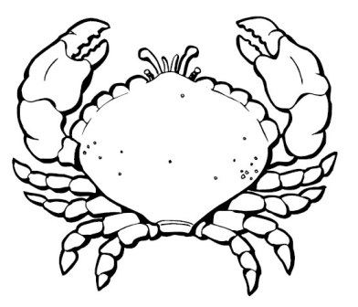 crab-coloring-page-9