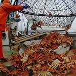 Comercio de cangrejos